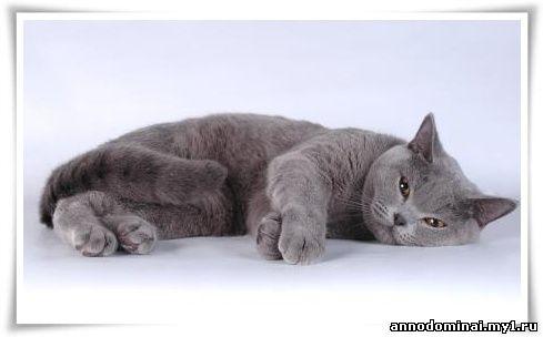Названия и фото породистых котов